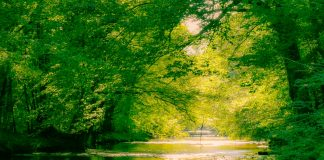 Gemini Shutter Works - Creek Tree Canopy-1